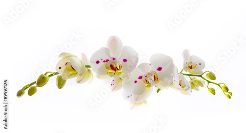 Stickers pour porte Orchidée Beautiful White Orchid Flower over White Background