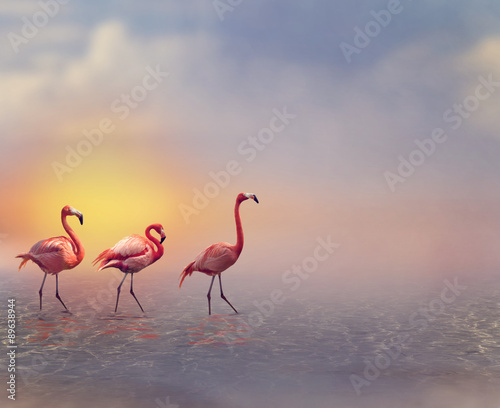Garden Poster Flamingo Flamingo Birds