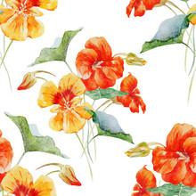 Watercolor Nasturtium Flower P...