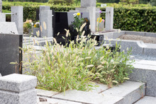 Weeds Covered Over Japanese Neglected Grave Yard