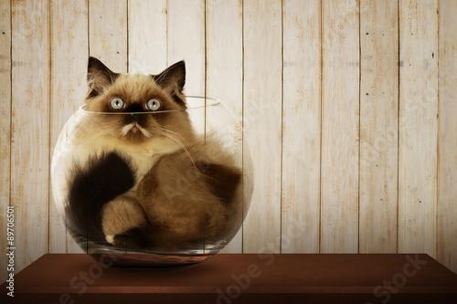 Foto op Aluminium Kat Cute persian cat inside glass bowl