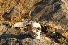 Artificial Skull And Plate Thrown On The Rock, Among Dry Grass. Selective Focus.
