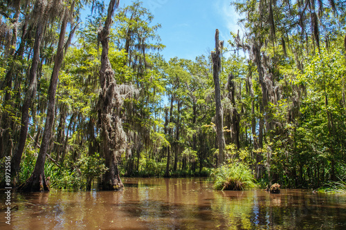 Fotografie, Obraz  Midday in the Louisiana swamp