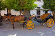 Pretty typical Andalusian horses with carriages in Seville, Spain