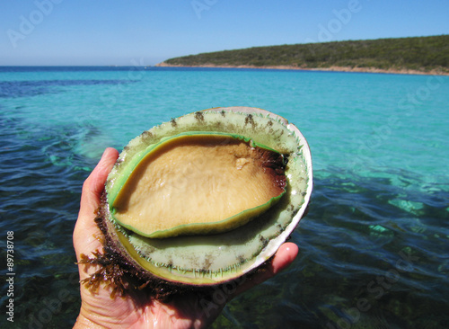 Abalone being held with pristine sea in the background Canvas Print
