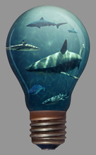 Sharks In A Light Bulb