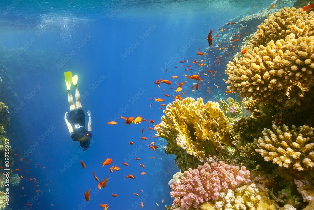 Fototapeta Woman snorkeling close to reef, Dahab, Red Sea, Egypt