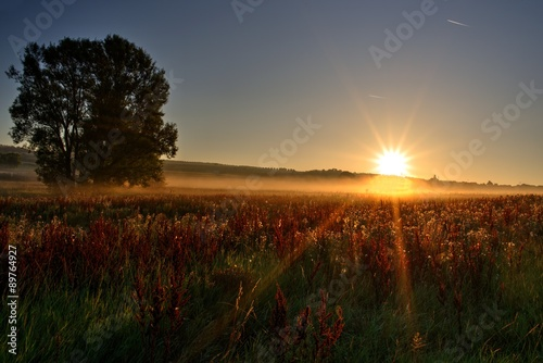 Photo Stands Landscapes Sonnenstrahlen am Morgen