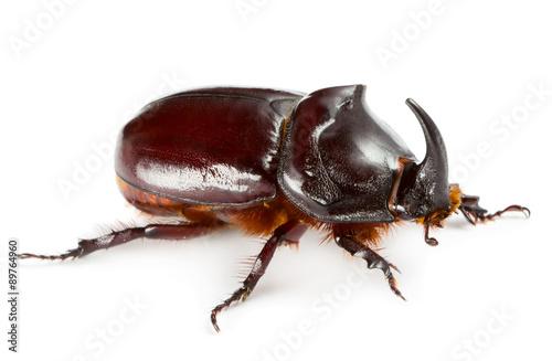 Einhorn Käfer Fototapete