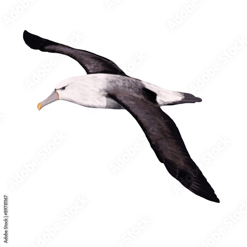 Albatross Canvas-taulu