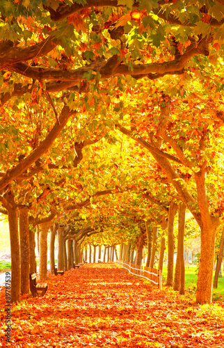 Staande foto Herfst Nice autumnal scene in the city