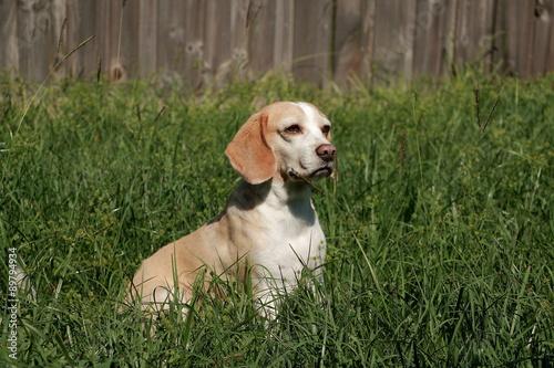 Tela  Bobby prepared for the photo shoot, Es un perro traido de Chia Colombia, desde un criadero de perros