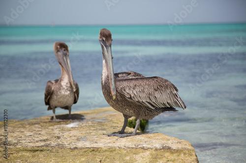 Foto op Plexiglas Caraïben Paesaggi caraibici della polinesia con isole e mare corsllino