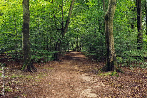 Poster Road in forest Pathway in Dense Foliage Summer Forest.