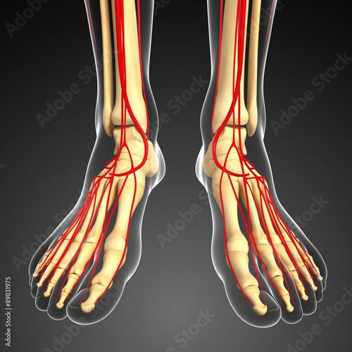 3d-odplacajaca-sie-ilustracja-noga-kosca-anatomia