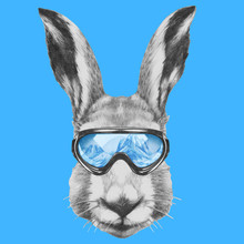 Portrait Of Hare With Ski Goggles. Hand Drawn Illustration.
