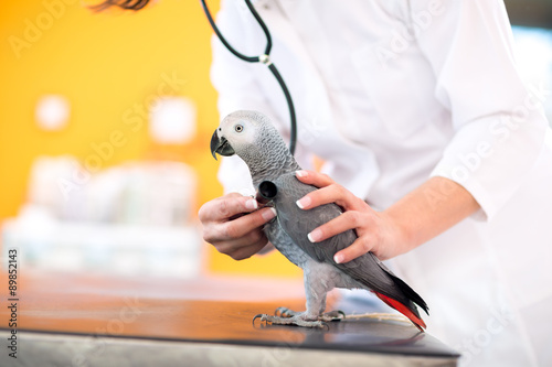 Medical examination of sick parrot in vet clinic