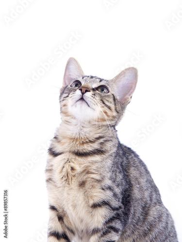 Printed kitchen splashbacks Cat Katze