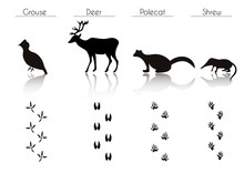 Set Of Black Forest Animals An...