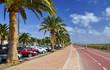 Bicycle path and palm avenue. Jandia. Fuerteventura.