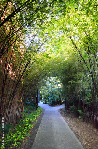 A path with dense bamboo groves on both sides..