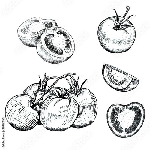 Fotografie, Obraz  Ink tomatoes sketches set
