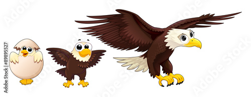 Poster Chambre d enfant Development of the eagle in different ages