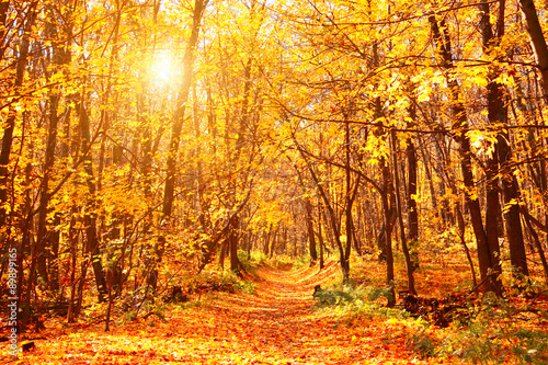 Poster Miel Road in autumn forest