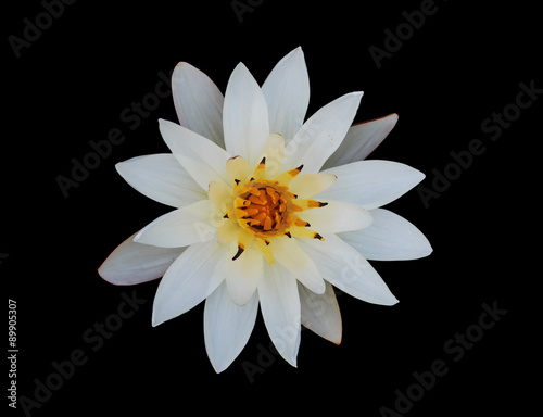 White Lotus Flower On Black Background Water Lily Clipping Pat
