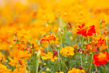 Blurred Of Flowers And Background Texture Abstract