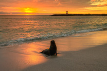 Baby Fur Seal At Punta Carola,...