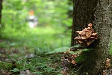 Mushrooms Grow On Trees