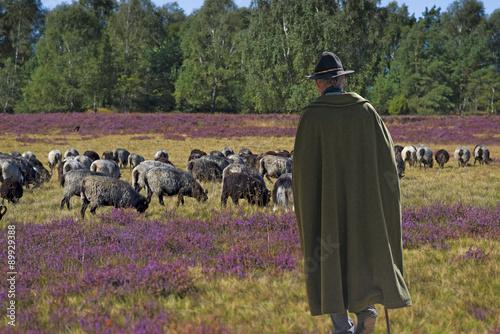 Fotografie, Obraz  Schäfer mit Herde