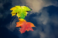Autumn Colorful Foliage On Water