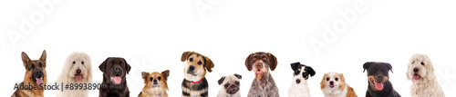 Poster Chien Reihe verschiedener Hundeköpfe