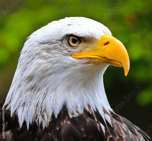 Spoed Foto op Canvas Eagle Standing Guard