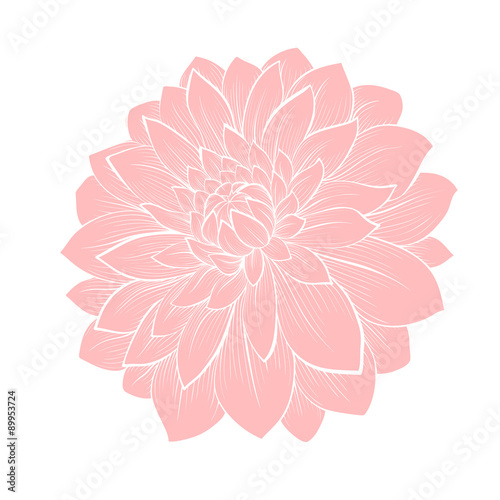 Stampa su Tela beautiful dahlia flower isolated on white