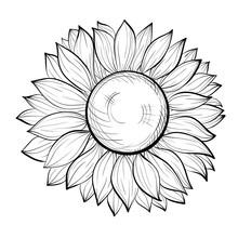 Beautiful Black And White Sunflower Isolated On White Background