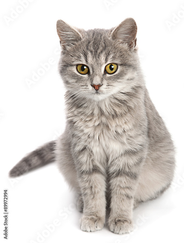 Gray cat sitting on white - 89972994