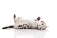 Cute Kitten Lies On His Back A...