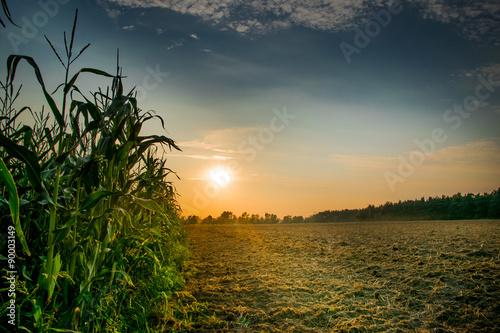 Canvas Prints Culture Beautiful sunset, skyline and corn field