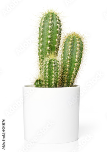 Foto op Canvas Cactus tus in pot