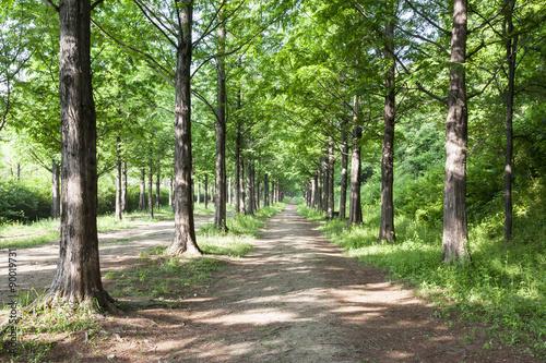 Tuinposter Weg in bos Lighting Tree Trail