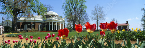 Fotografie, Obraz  Tulips and Monticello in spring, Virginia