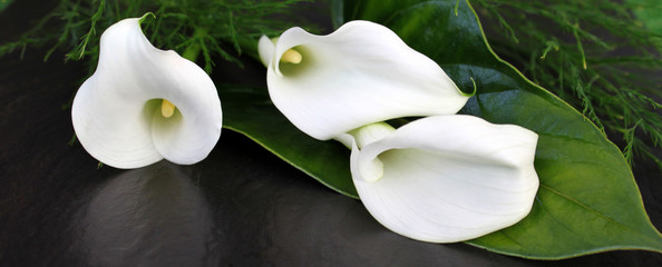 Fototapeta Weiße Calla Blüten
