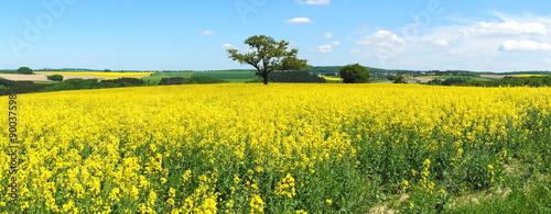 Aluminium Prints Yellow Rapsfeld Panorama