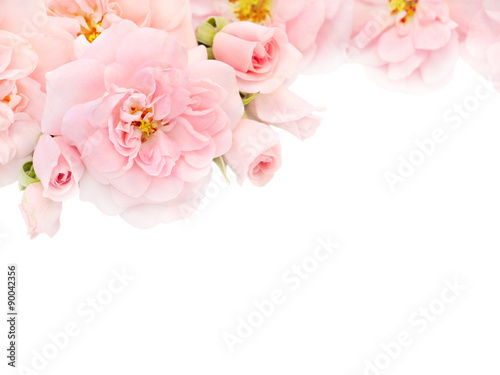 Pink roses and buds in the corner of the white background #90042356