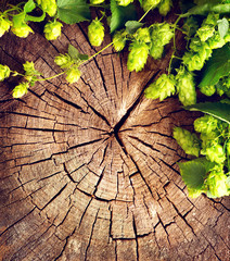 Fototapeta Do gastronomi Fresh, green hop branch on cracked wooden background. Brewing concept