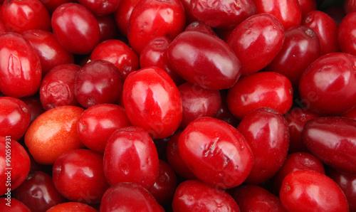 Valokuva  fresh cornel berries
