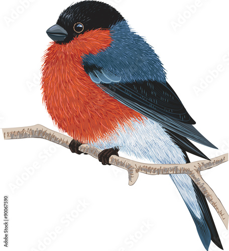 Tela Bullfinch sitting on a tree branch isolated on white background